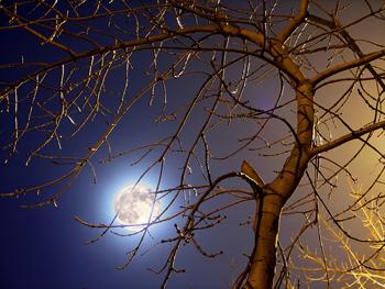 Clair de lune- Petite Lutin